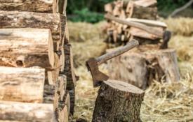 Biomassa pijler energietransitie duurzame energie